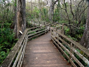 Sage-Corkscrew Swamp, Naples, FL